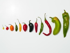 chile-primer-various-peppers